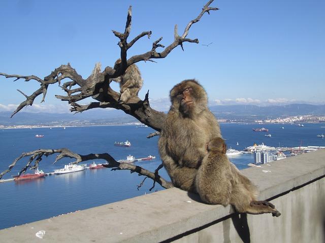 gibraltar-117572_640